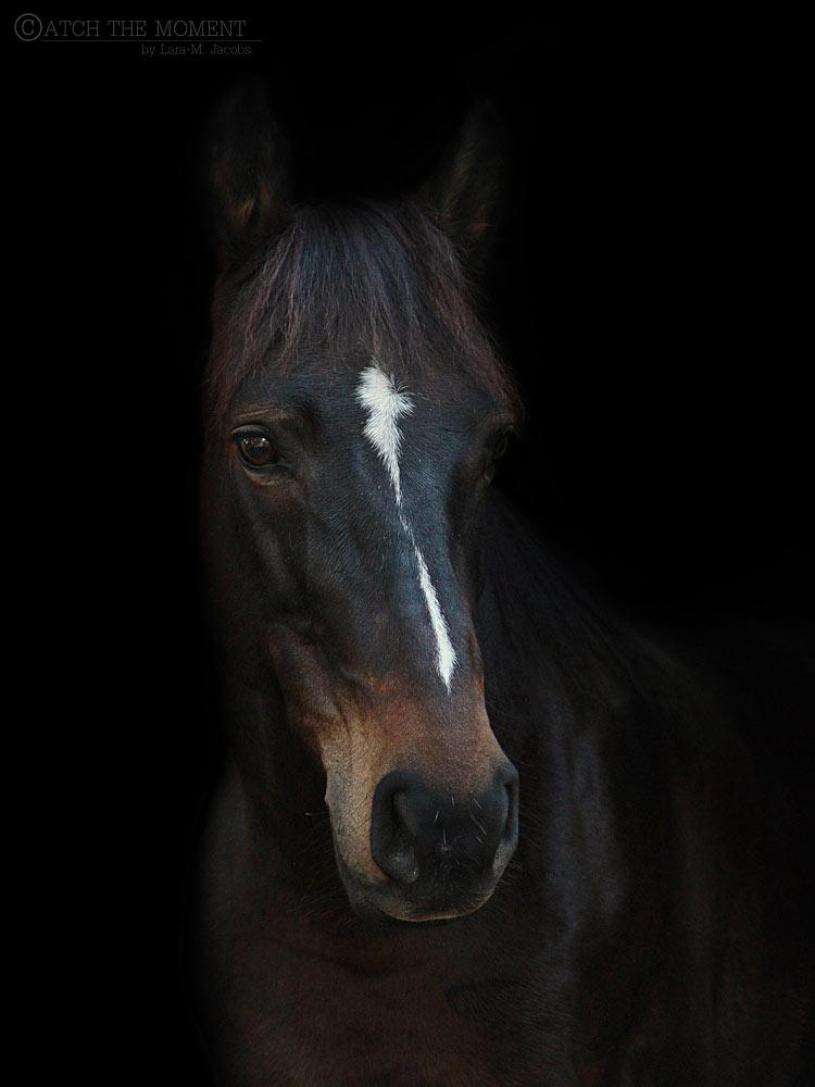 Unsere Pferde vom Pferdehof Morgenstern Sardinien