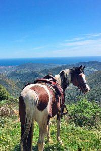 Reiturlaub auf Sardinien - Pferdehof Morgenstern