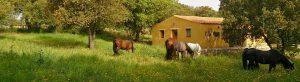 Pferdehof Morgenstern - Reiturlaub auf Sardinien